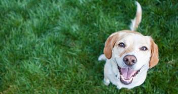 Världens Lyckligaste Hundar